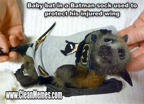 Bat Meme - new trending popular memes clean memes the best the