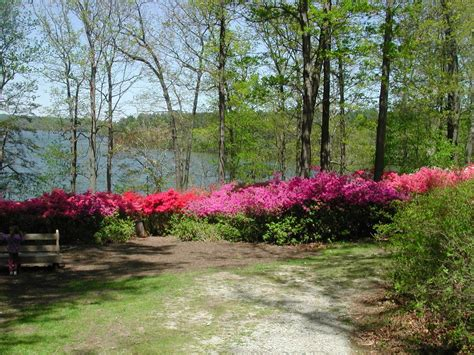 panoramio photo of brighton dam azalea garden