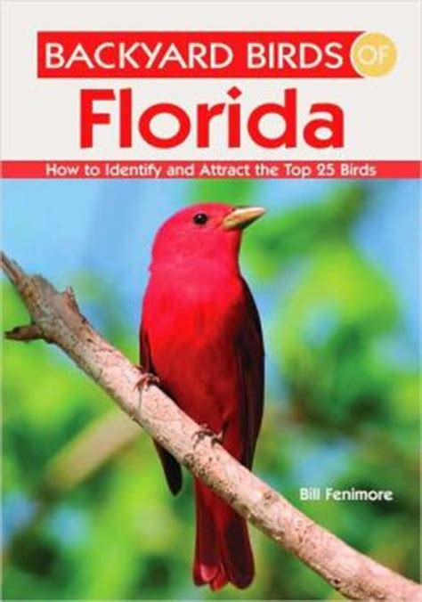 florida backyard birds backyard birds of florida how to identify and attract the top 25 birds by bill fenimore
