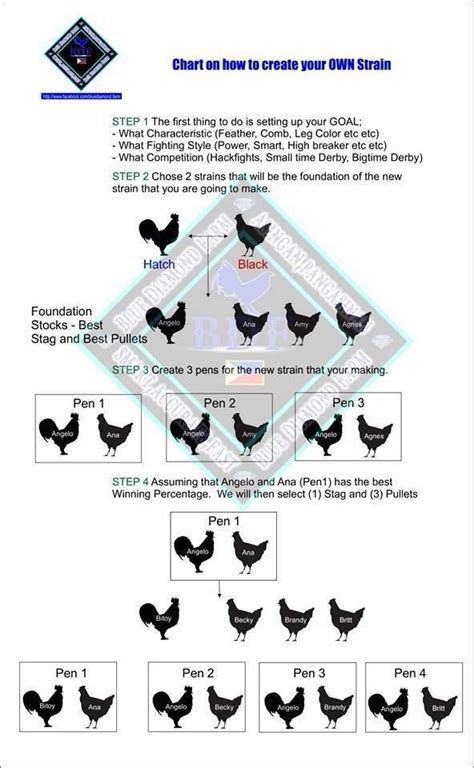 genetics breeding chart chickens chicken breeds chart