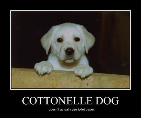 cottonelle puppy boycott the koch brothers and pacific products