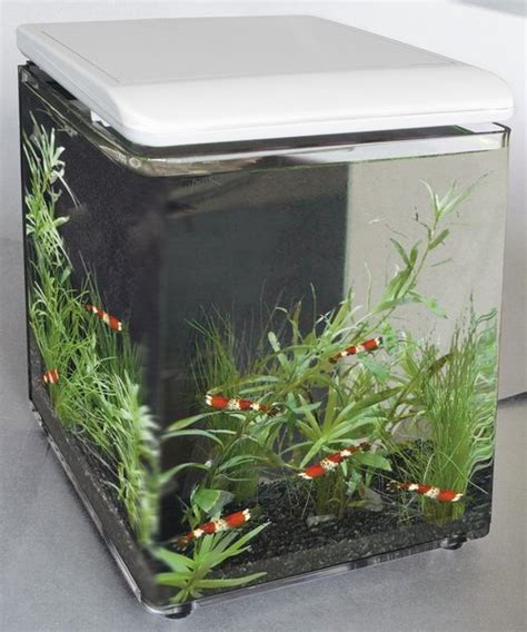 15 Liter Aquarium Bulatfish Bowl 1 superfish home 8 aquarium weiss aqua lorenz