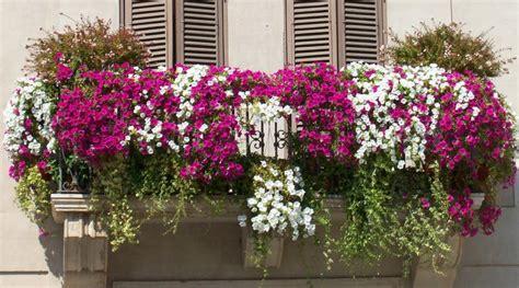 balcone fiorito i vincitori concorso quot balcone fiorito 2016 quot di