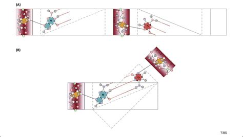Origami B Cells - twenty years later the evolution of origami dna trends
