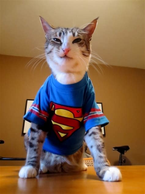 Supercat Kitten 800gr cat cuteimages net