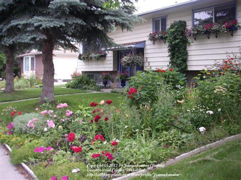 10 Foot Trellis Adding Height To A Trellis For Hops Garden Org