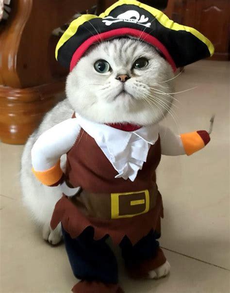 Cat Costume 44 cat costumes that are purr fect brit co