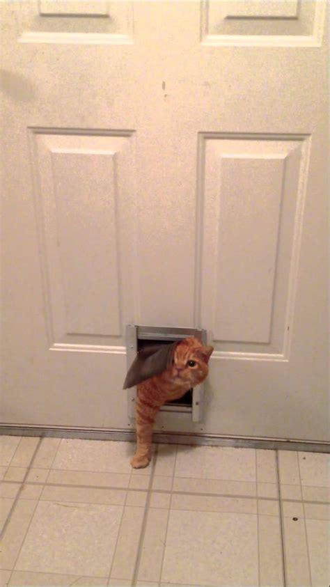 How To Get A Through A Door by Cat Squeezes Through Small Doggie Door