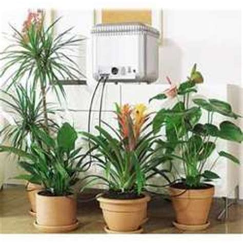 top house plants top indoor plants best air filters for homeplant placement top indoor plants best air