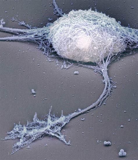 time travel   brain cell membrane