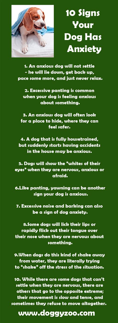 signs of anxiety in dogs 10 signs your has anxiety doggyzoo comdoggyzoo