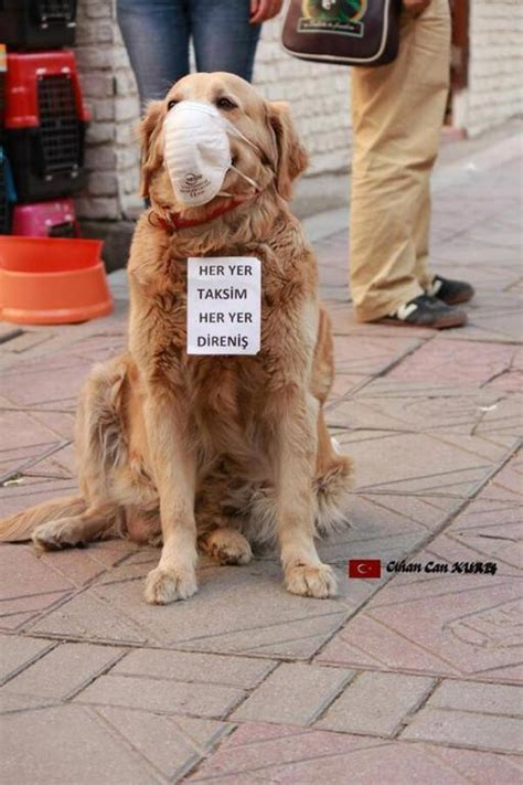 stray puppy whiskers of discontent turkish stray dogs in the recent uprising
