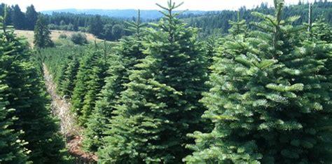 christmas tree farms boise choinka tygodnik program