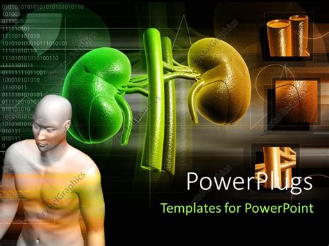 kidney themes for powerpoint powerpoint template human anatomy with kidney structure