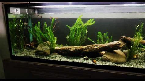 Aquascape Ideas Tropical 6ft Aussie Native Aquarium Display Youtube