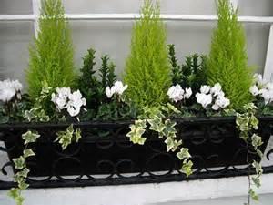 window box ideas for winter winter window box gardening