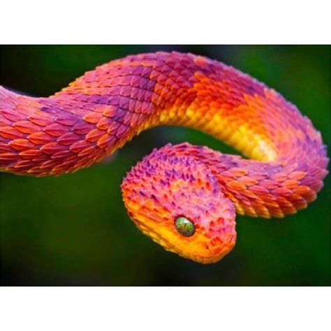 snake colors snake colours snake rainbow colour colourful snake