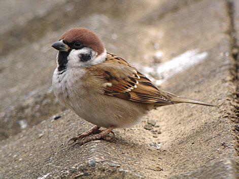 Sparrow River sparrow tama river upstream line migowa gate