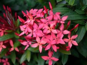 garden flowers and plants bali bungalow pondok bambu flowers and plant of bali