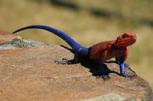 animals that change color most strangely colored animals on earth
