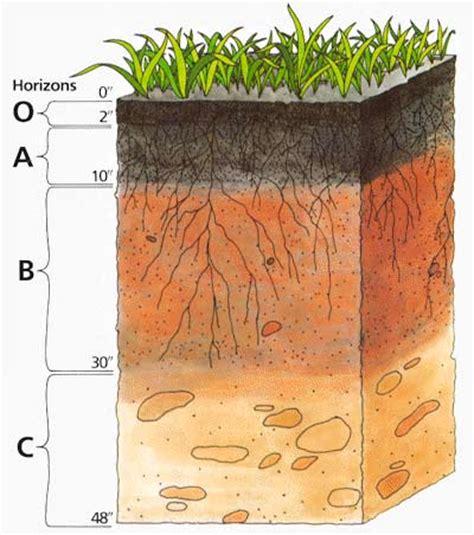 zeigerpflanzen tabelle scinexx schematisierte horizontabfolge im boden