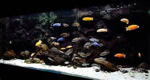 All About Aquarium Fish Freshwater Tropical Fish   Review Ebooks
