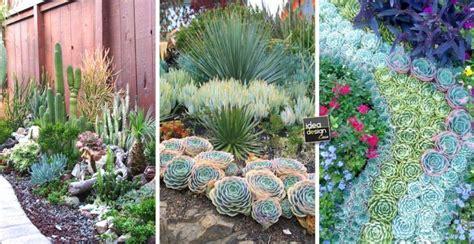 piante grasse in giardino un giardino di piante grasse 20 esempi stupendi da cui