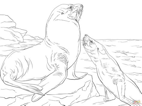 sea lion coloring pages printable steller sea lions coloring online super coloring