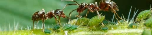 Mittel Gegen Ameisen Im Garten 3699 by Ameisen Mittel Gegen Ameisen