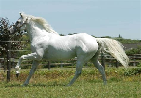 dati galoppo horses of the world galoppo statistiche e
