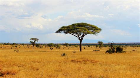 explorer s guide to wildlife adventures eastern united states edition books kenya wildlife explorer global basecs