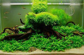 jenis tanaman air  mudah didapatmencari tanaman