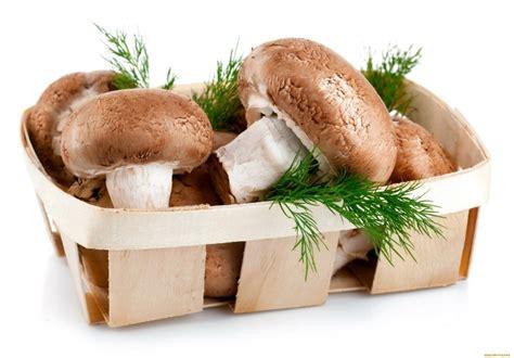 funghi bambini alimentazione funghi a et 224 i bambini possono mangiarli cibimbo