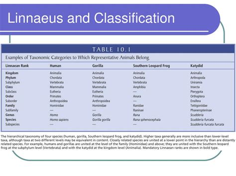 by carolus linnaeus classification ppt phylogeny and systematics powerpoint presentation