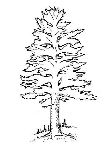 coloring page of pine trees pine tree forest coloring page coloring pages