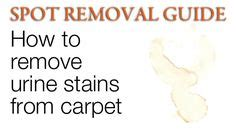how to remove cat urine smell from concrete basement floor 1000 images about pet stains on pet urine