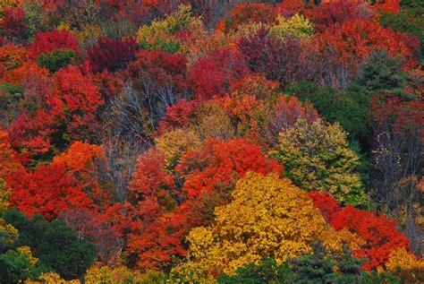 new fall colors beautiful fall colors new 3 new fall