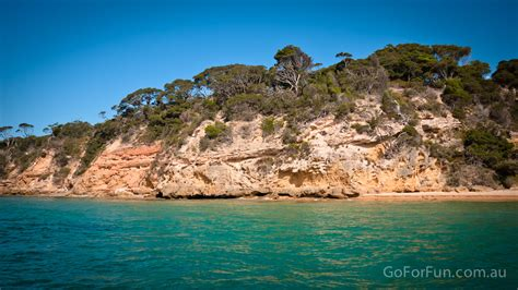 boat tour queenscliff see dolphins seals and gannets in port phillip bay eco