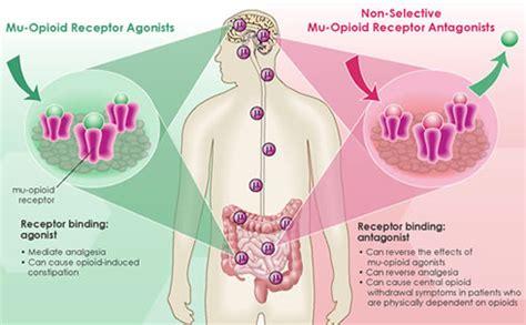 Opiod Detox Causes by List Of Opioid Agonist Drugs Opiate