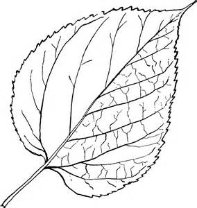 Outline Drawing Of A Leaf by Leaves Drawing Simple Clipart Best