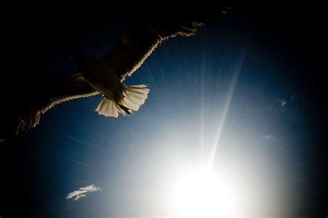 luce nel cuore sia il tuo pensiero sempre lo scrigno di un segreto