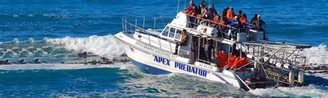 dive shark shark cage diving great white shark tours