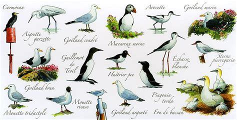 imagenes animales con plumas flora y fauna marina tipos de flora y fauna marina