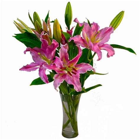 Vase Of Lilies by Glass Vase Of Pink Lilies India