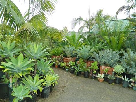 tropical plants san diego palm tree nursery san diego california