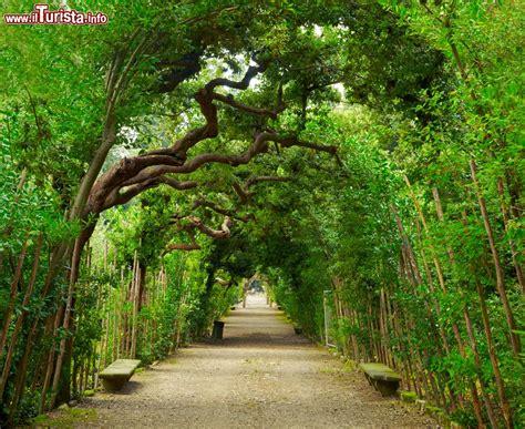 giardino di boboli mappa galleria verde ai giardini boboli di firenze foto