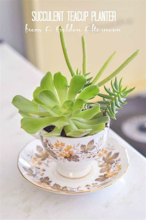 cute succulents how to create and care for your stunning succulent