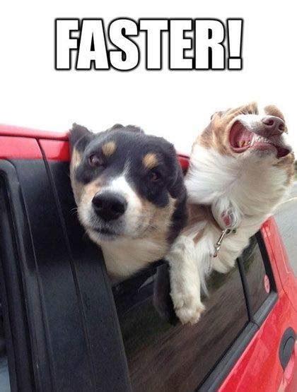 funny dog meme faster
