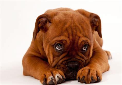 worldwide puppies ten cutest puppies in the world