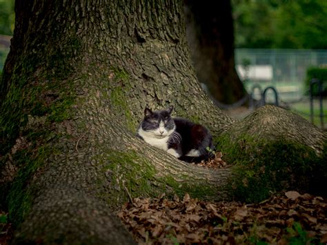 cat in 5 days in tokyo cats of hibiya park suggestion of motion
